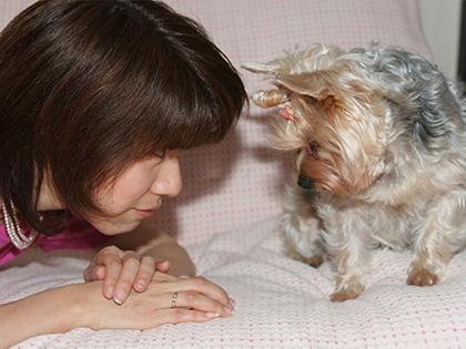 動物と触れ合う